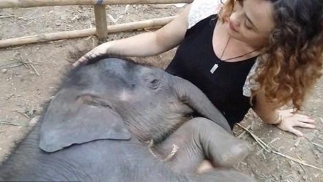 Слонче заспива в прегръдките на жена, пееща му приспивна песен (видео)