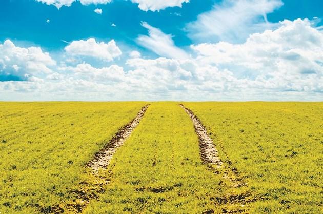 Киселинността на почвата се повишава от агротехническите дейности, свързани с отглеждането на културите