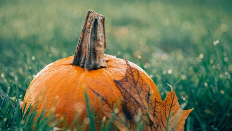 Звездна прогноза за октомври