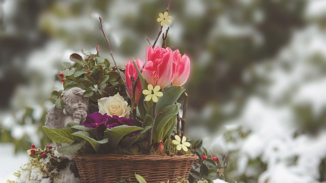 Да украсим и зимата в цвят