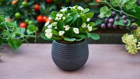 Лечение на най-срещаните болести по стайните цветя