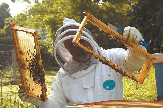От май работата на пчеларя е всеки ден
