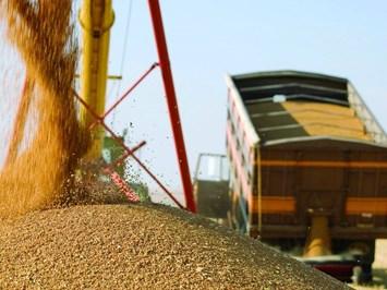 С 2-10 лв. на тон ще падне цената назърното за фермера при тол системата
