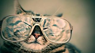 Как котките помагат на здравето