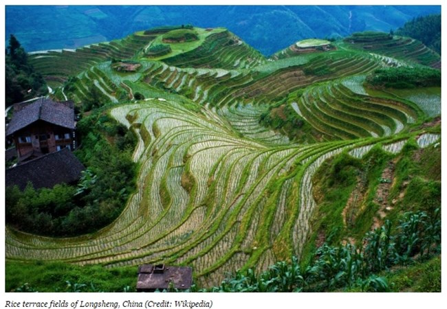 Оризови тераси, Лонгшен, Китай Снимка: forbes.com