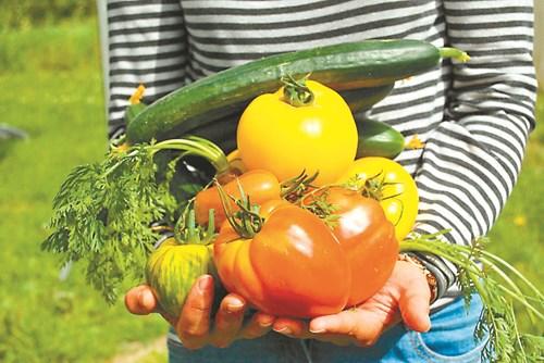 Има правила за издръжливи зеленчуци