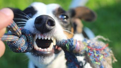 Алтернативни средства за бели и здрави зъби