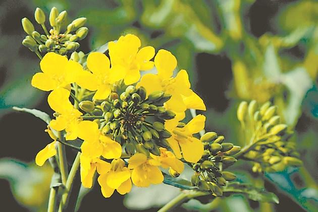 Третиранията срещу неприятели се извършват по предписания, за да се опазят пчелите