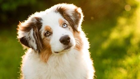 Кучето ми се страхува от гърмежи и бяга. Как да му помогна?