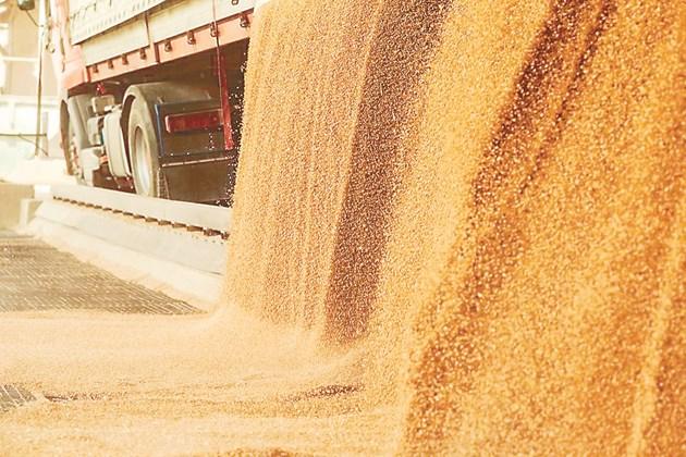 Тази година се очаква у нас да има високи цени на зърното и много добра реколта