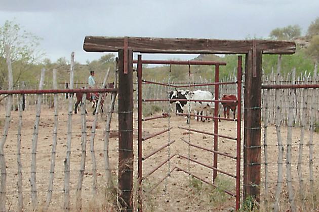Кравите могат да огънат метала