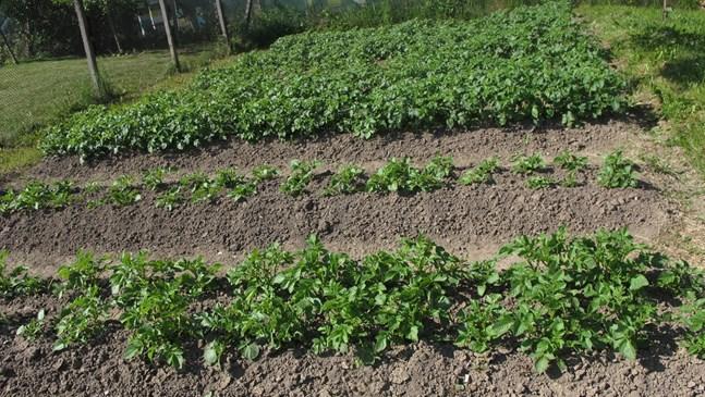 Актуални грижи за засадените растения