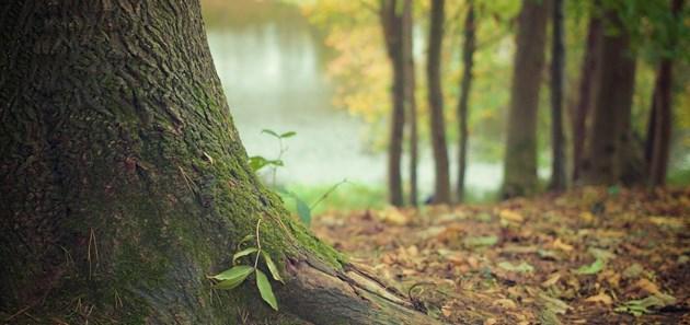 Назовете едно нещо, което ще ви е необходимо, за да оцелеете в дивата природа.