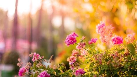 Какво да направим за цветята и градината през септември