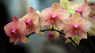 7 съвета за красива орхидея