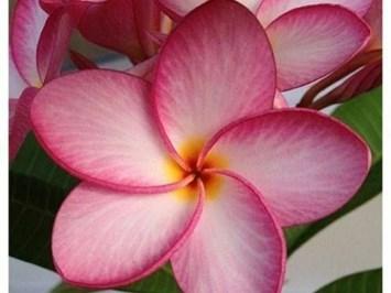 Екзотика и при цветята