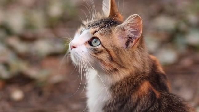 Бременна сте и имате котка у дома. За какво да внимавате