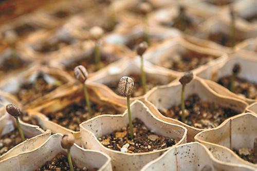 Стимулирайте семената, които никнат бавно
