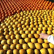 Веригите искат вето за тавана на цени, но за седмица лимоните поскъпнаха с 50%