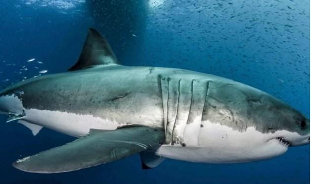 Акула уби млад сърфист в Австралия