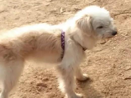 Куче пътува 60 км, за да се върне при стопанина си
