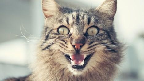Котките, които предпазват от зли духове