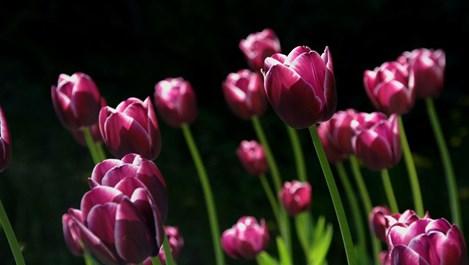 Рисковете на подранилата пролет