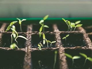 Младите растения са чувствителни към водата