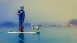 С куче на море? Какво трябва да знаем
