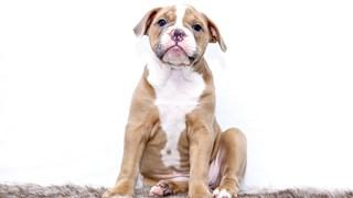 Как да приобщим кученцето и с какво да го захраним