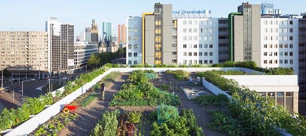 Върху покривите на сгради в големи градове по света вече се отглеждат зеленчуци и плодове.