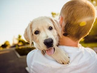 Изненадващи сигнали, че вашето куче ви обича