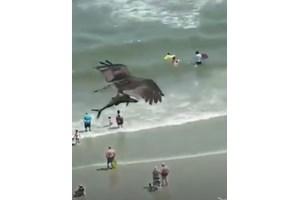 Орел сграбчи акула, прелетя с нея над оживен плаж (Видео)