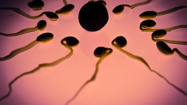 Създадоха бебета без помощта на яйцеклетки