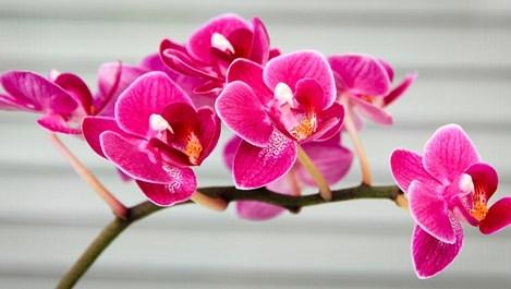 Какво да правим с новата орхидея