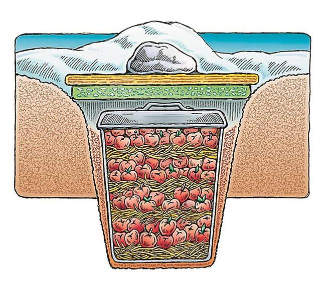 Чрез наслояване на ред ябълки, ред слама можете да съхраните плода цяла зима