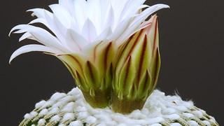 Кои цветя от какво пречистват въздуха вкъщи
