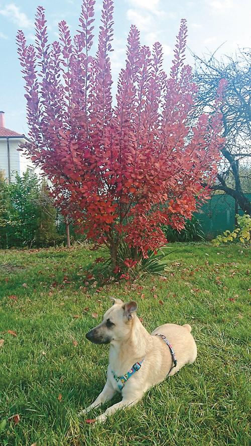 Как да направим градина, подходяща за кучета