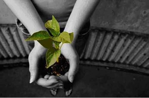 Добрата почва - основата за здравите растения