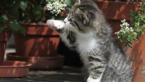Как да спрем котката да рови в саксията