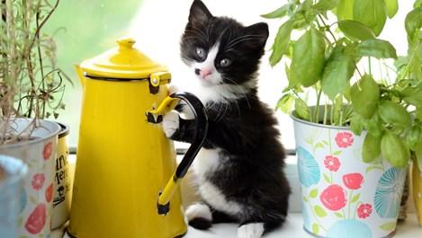 Котките наистина ли пазят от лоша енергия?