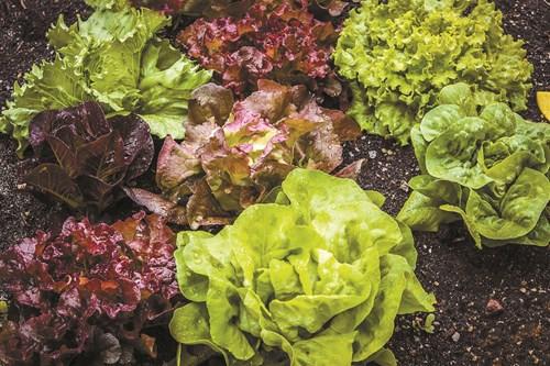Сеитба на листни зеленчуци
