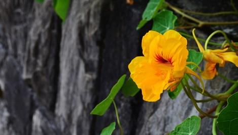 5 билки, които се берат през август