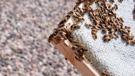 Увеличават се алергичните към прополис