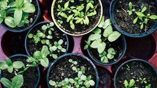 Най-лечебните билки, които може да гледаме на балкона