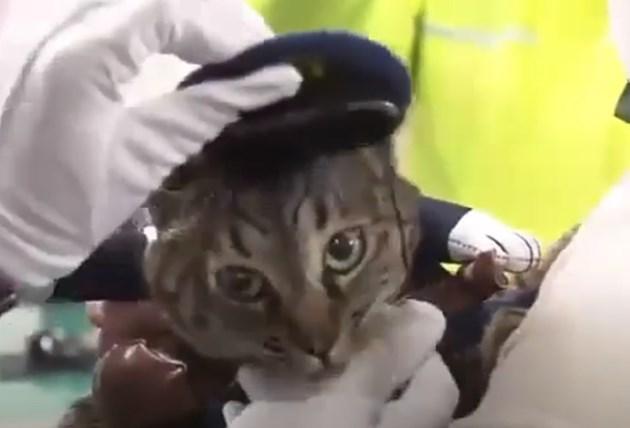 Котката Коко, облечена в полицейска униформа КАДЪР: YouTube