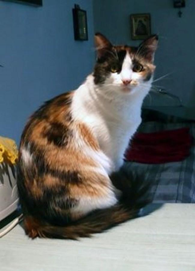 А това е е котянушката Джой, която спасих от улицата - беше едва на два месеца.