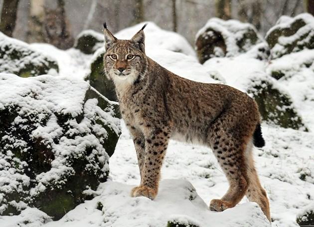 Уникално животно открито в Балкана