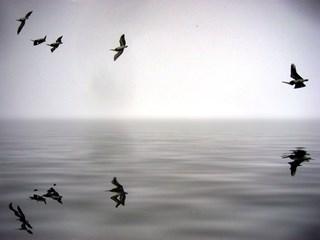 Коко Шанел: Ако си роден без криле, не им пречи да израснат