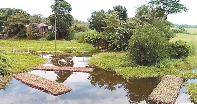 В Бангладеш много дребни фермери, които преди са разчитали на оризови култури, се отказват от тях заради последиците от изменението на климата и по-добрата възвръщаемост на алтернативните култури